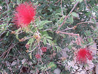 Utahflowers