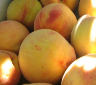 Peachescloseup