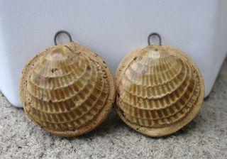 Seashell charm pair