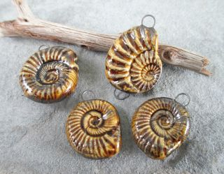 Destash Ammonites 1