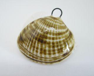 Porcelain Seashell Pendant 2